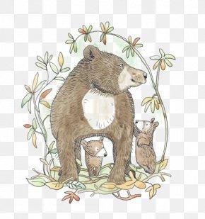Brown Bear - Brown Bear Raccoon Illustrator Illustration PNG