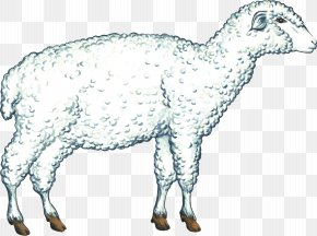 Sheep - Cattle Goat Sheep Caprinae Pack Animal PNG