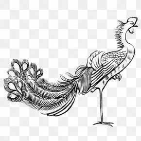 Black And White Lines Painted Peacock - Fenghuang Stroke Bird Budaya Tionghoa Chinese Mythology PNG