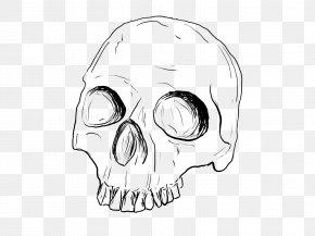 Skull - Drawing Skull Line Art Sketch PNG