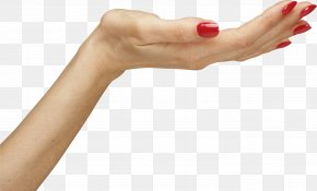 Hands Hand Image - Woman Hand Icon PNG