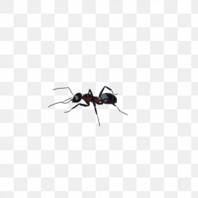 Ant - Black Garden Ant Insect Tupolev ANT-2 PNG