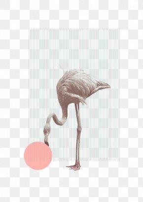 Flamingo Illustration - Poster Artist Graphic Design PNG