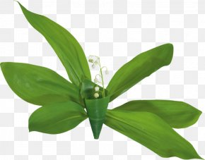 Lily Of The Valley - Lily Of The Valley Animaatio Clip Art PNG