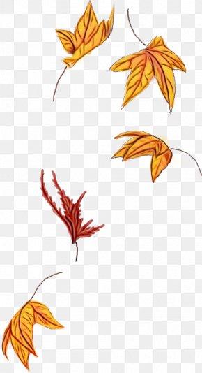 Flowering Plant Flower - Orange PNG