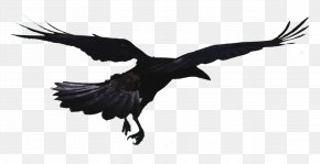 Flying Crow - Rook Hooded Crow Bird Common Raven Flight PNG