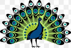 Peacock - Peafowl Clip Art PNG