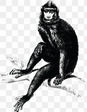 Gorilla - Common Chimpanzee Gorilla The Evil Monkey T-shirt PNG