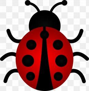 Free Cliparts Ladybugs - The Grouchy Ladybug Beetle Ladybird Clip Art PNG