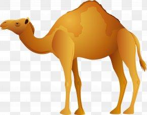 Camel - Camel Clip Art PNG