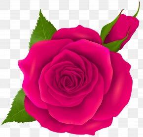 Pink Rose And Bud Transparent Clip Art - Garden Roses Centifolia Roses Rosa Chinensis Floribunda Pink PNG