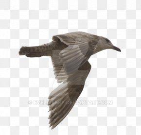 Gull - Gulls Bird DeviantArt Photography PNG