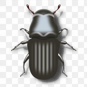 Beetle - Darkling Beetle Ladybird Clip Art PNG