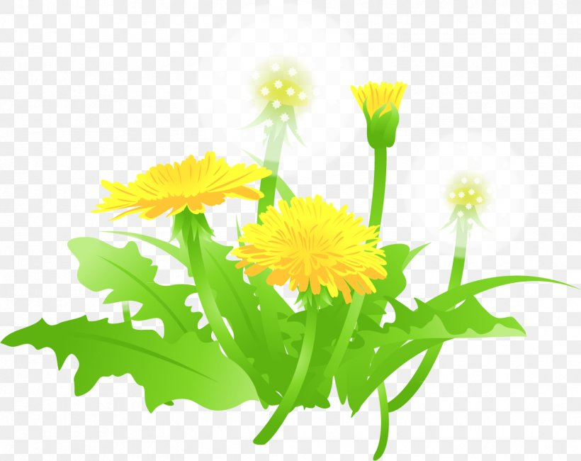 Vecteur, PNG, 1241x984px, Vecteur, Annual Plant, Calendula, Chrysanthemum, Cuadro Download Free