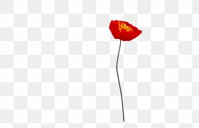 Poppy - Flowering Plant Petal Plant Stem PNG