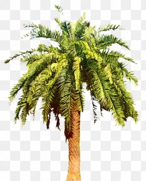 Canary Island Date Palm Palm Trees Shrub PNG