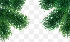 Fir-tree Image - Tree Arecaceae Branch PNG
