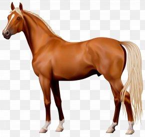 Horse - Horse Stallion Clip Art PNG