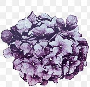 Purple Hydrangea - Hydrangea Lavender Lilac Cut Flowers PNG