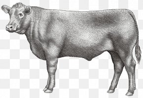 Meat - Dairy Cattle Angus Cattle Calf Beef Zebu PNG