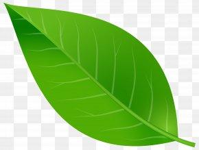 Spring Leaf Transparent Clip Art Image - Leaf Clip Art PNG