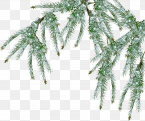 Fir-tree - Tree Pine Branch Snow PNG