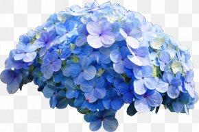 Blue Flower - French Hydrangea Flower Blue Rose PNG