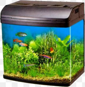 Fish Tank - Moscow Aquarium Filter Pet Shop Liter PNG