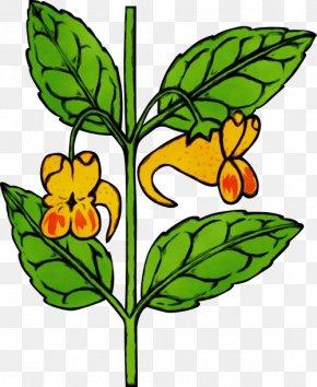 Wildflower Plant Stem - Flower Clip Art Plant Leaf Flowering Plant PNG