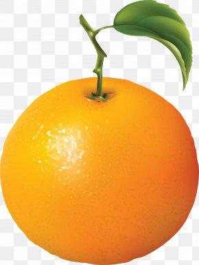Orange Image, Free Download - Orange Diagram Clip Art PNG