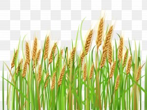 Ears Of Wheat Clipart - Wheat Cereal Ear Barley Clip Art PNG