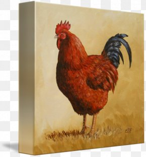 Rhode Island Red - Rooster Rhode Island Red Paper Zazzle PNG