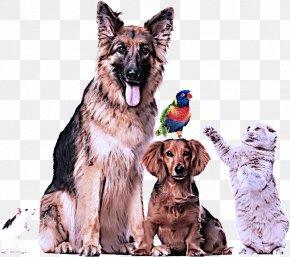 Giant Dog Breed German Shepherd Dog - Dog Sporting Group Rare Breed (dog) German Shepherd Dog Giant Dog Breed PNG