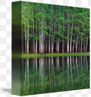 Lakeshore Records - Gallery Wrap Canvas Panorama Art Lakeshore Equipment Company Inc PNG