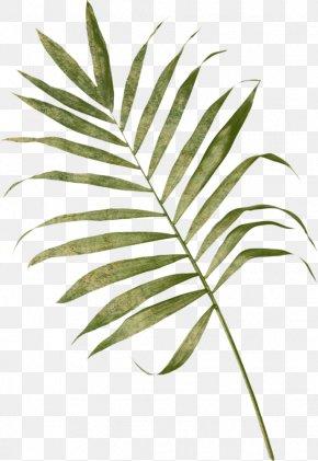 Leaf - Arecaceae Frond Leaf Palm Branch Fern PNG