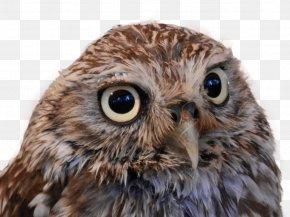 Owl - Owl ICO Icon PNG