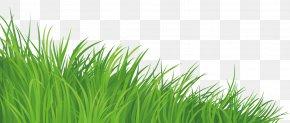 Wellcome - Clip Art Openclipart Desktop Wallpaper Lawn Free Content PNG