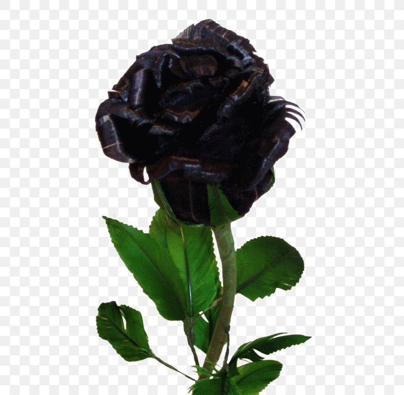 Black Rose Flower Desktop Wallpaper Yellow Png 538x800px Black Rose Black Blue Blue Rose Color Download