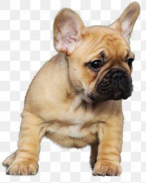 Bulldog - French Bulldog Staffordshire Bull Terrier Pug Puppy PNG