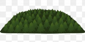 Forest - Temperate Coniferous Forest Tree PNG