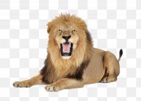 A Lion - Lion Icon PNG