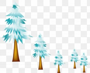 Vector Painted Pine - Fir Pine Spruce Hypothermia PNG
