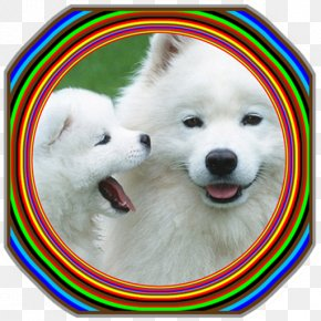 Puppy - Puppy Samoyed Dog Labrador Retriever Poodle Dog Breed PNG