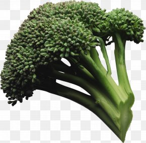 Broccoli Image - Broccoli Vegetable PNG