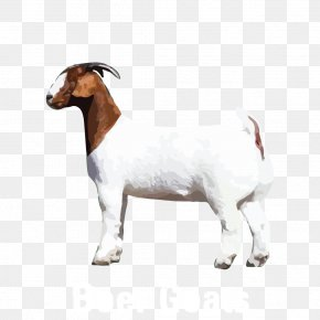 Goat - Goat Cattle Animal Snout PNG