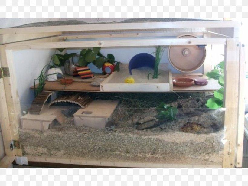 Djungarian Hamster Gerbil Dust Bathing