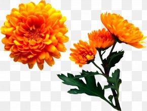 Chrysanthemum - Marriage Make Up Chrysanthemum Flower Book PNG