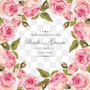 Creative - Garden Roses Centifolia Roses Flower Pink Floribunda PNG