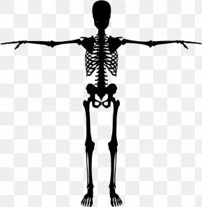 Skeleton - Human Skeleton Bone Silhouette PNG
