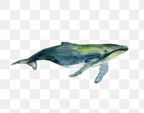 Watercolor Whale - Tucuxi Humpback Whale Watercolor Painting Drawing PNG
